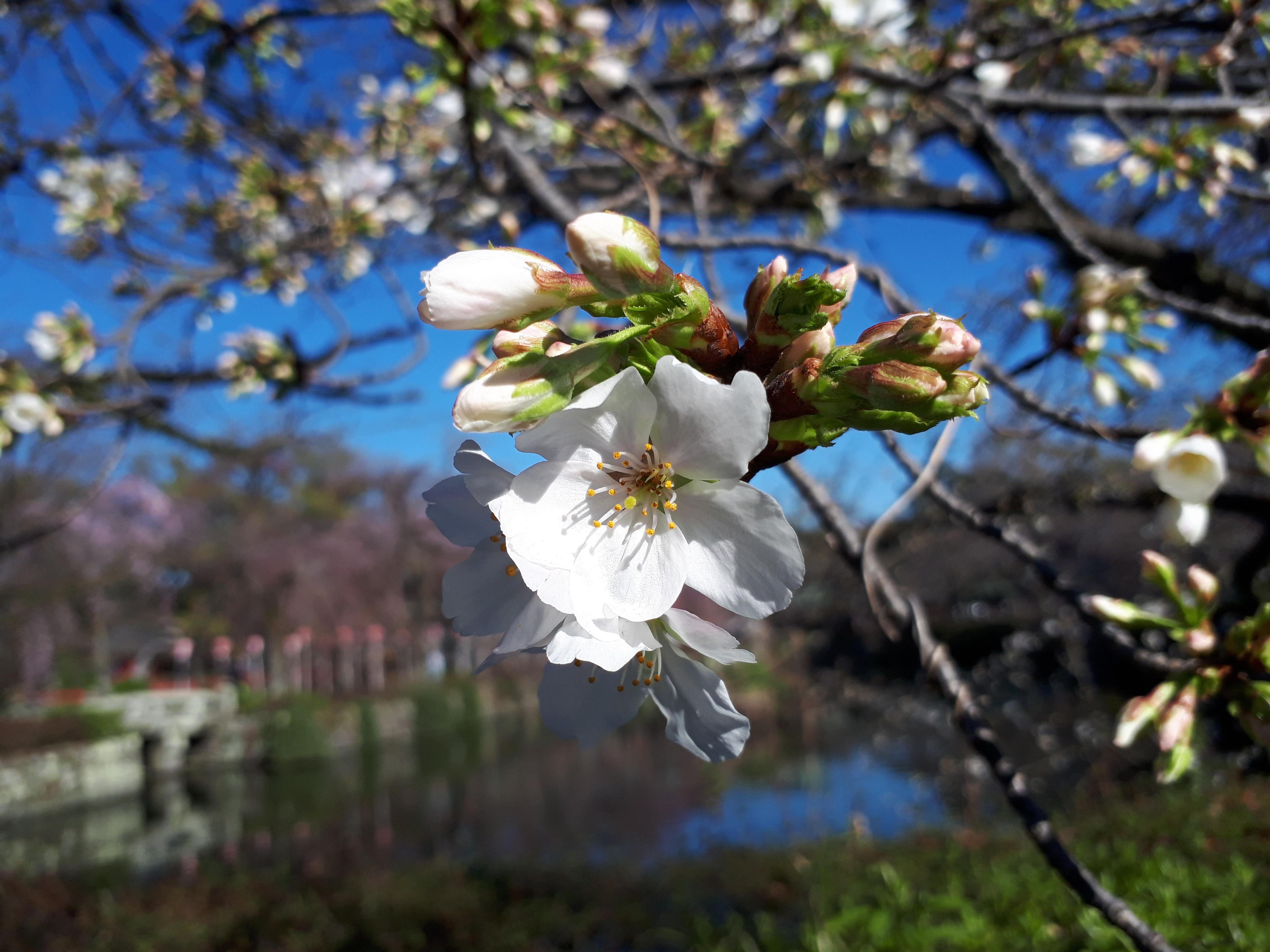 春を見つけに。