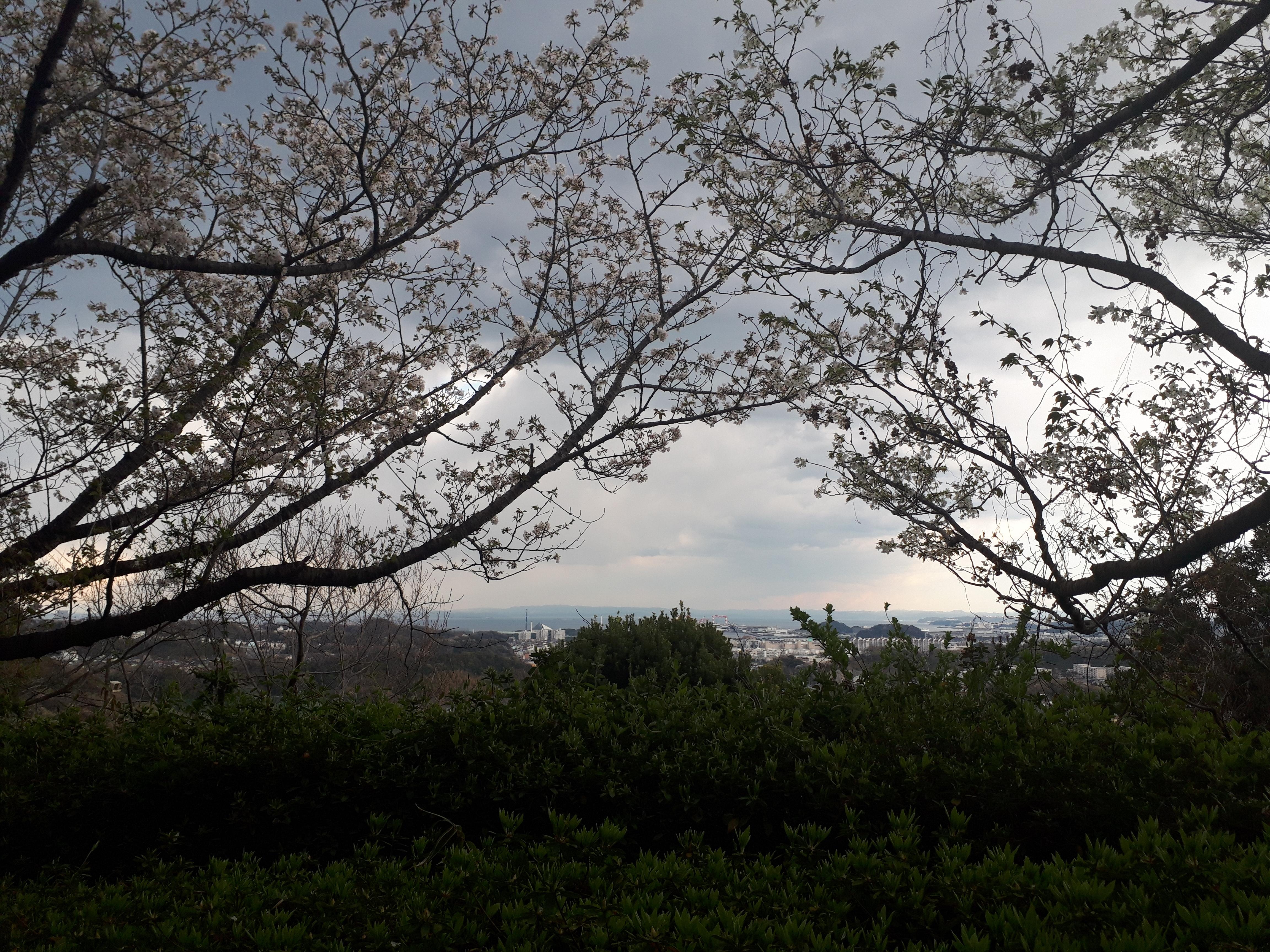 現場風景(金沢区自然動物公園内) (横浜・警備)
