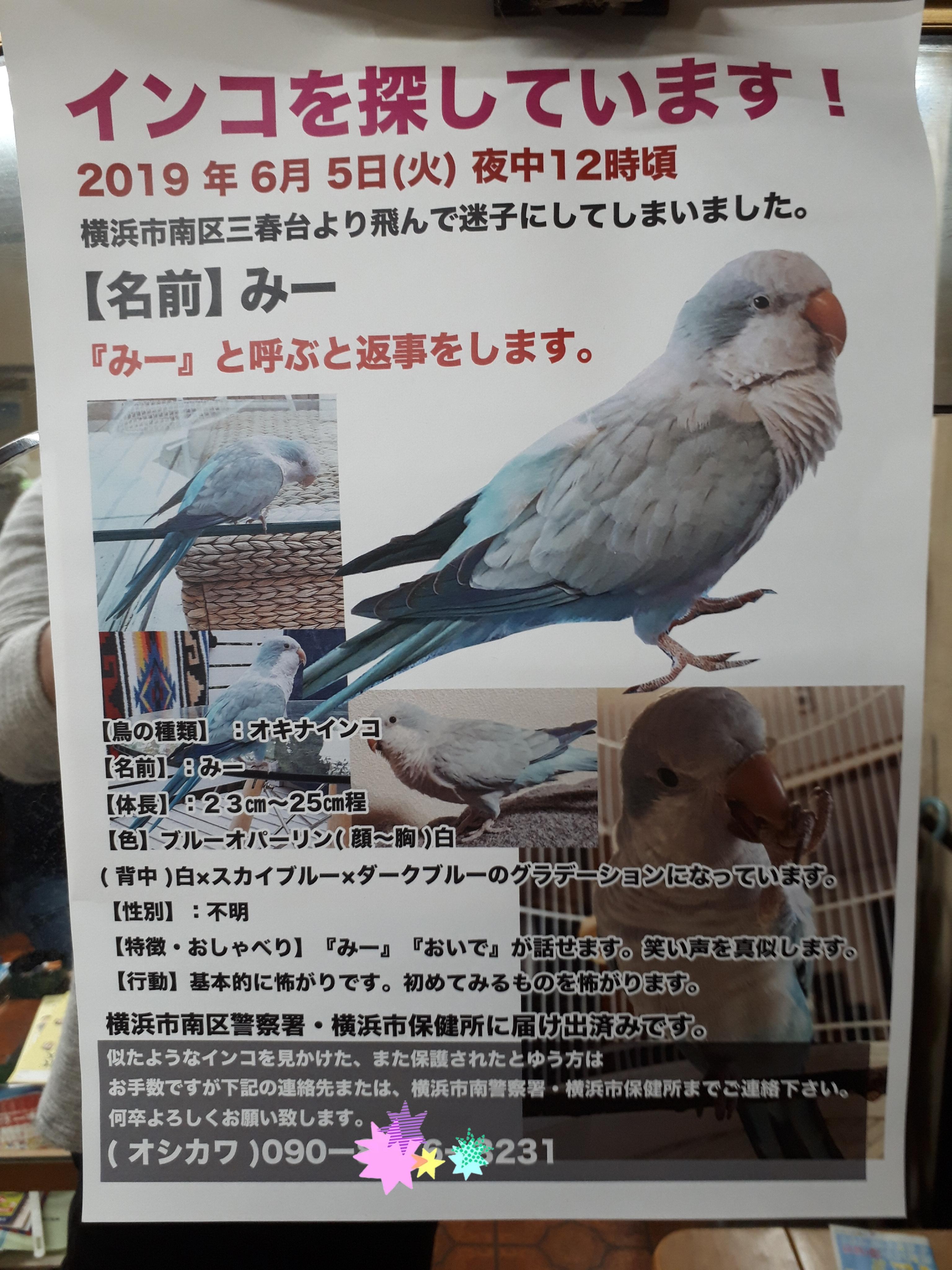 【拡散希望】インコのみーちゃんどこ行った!?