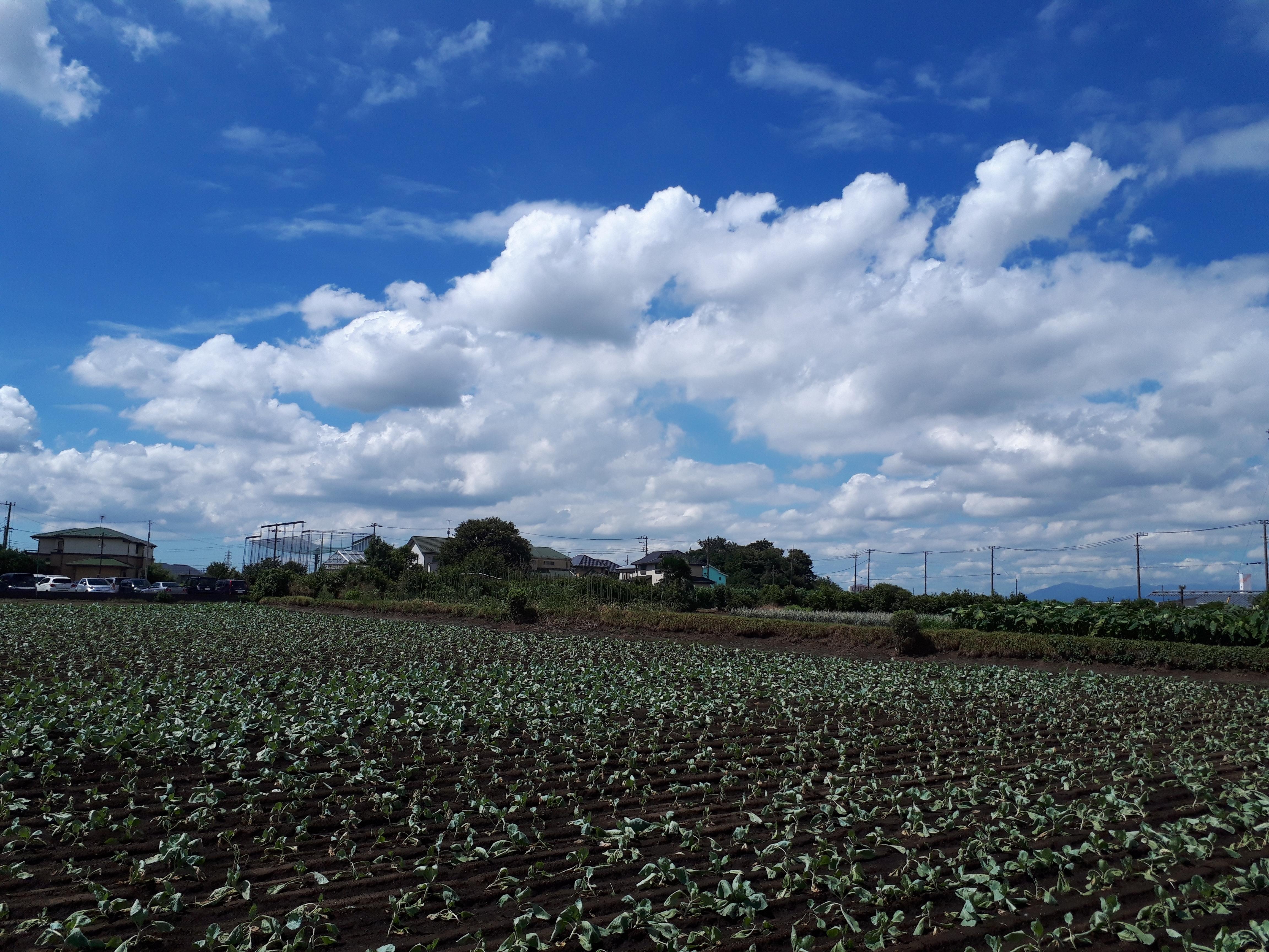 【悲報】横浜が田舎だって事が、先週の日曜日に証明されました。
