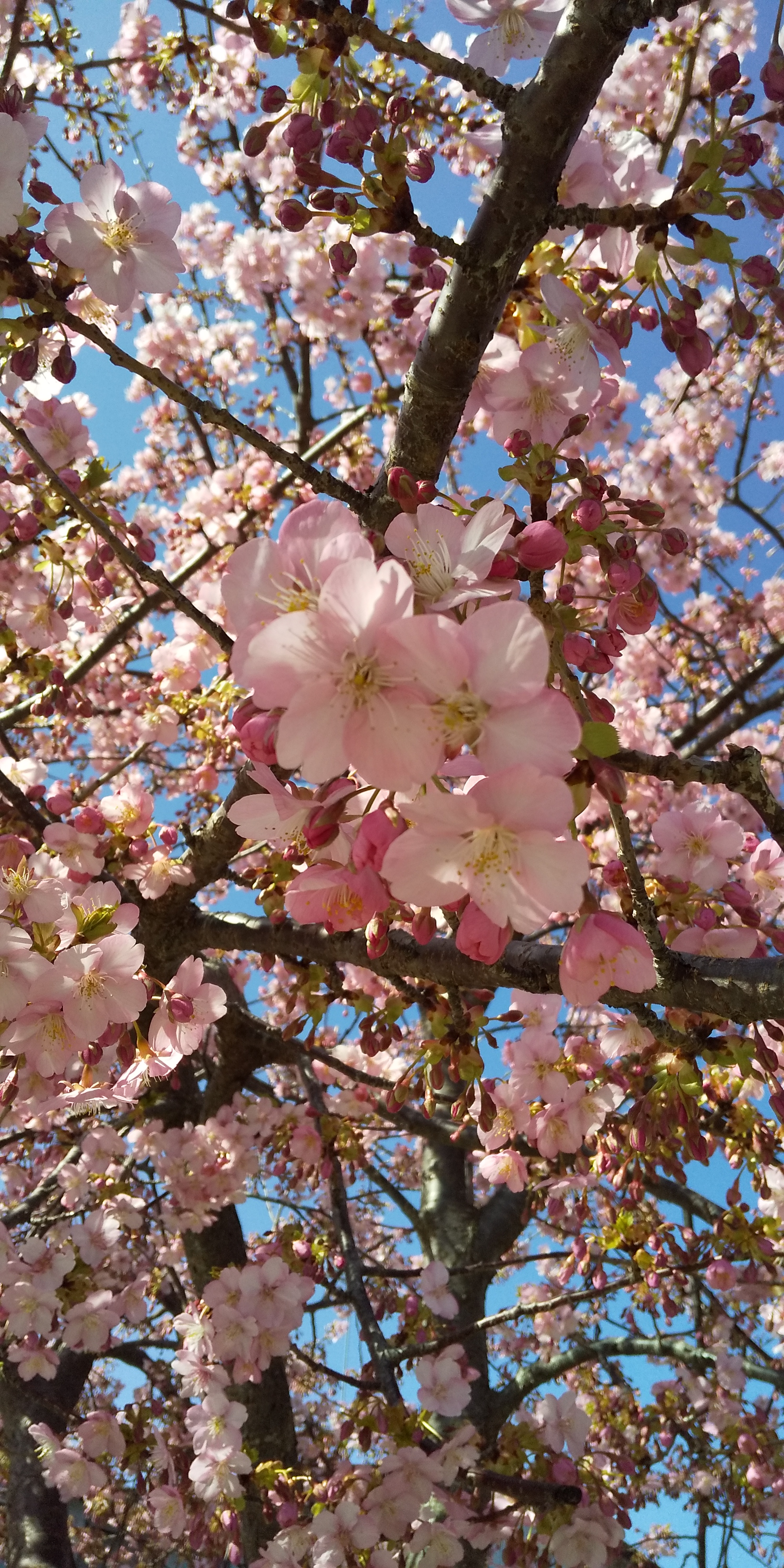 春到来!?今こそ予祝しようっ(*^-^*)